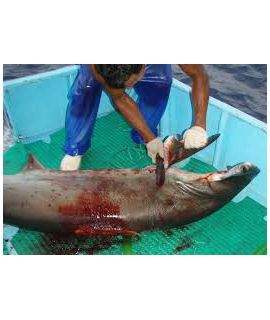 Gutschein STOP SHARK FINNING 2017