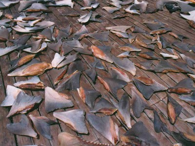 haifischflossensuppe